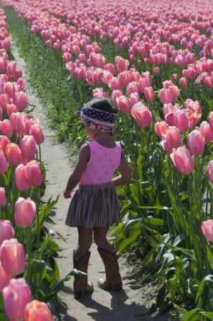 Tulip Festival, La Conner